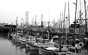 Jack Thomas - Fishing Fleet