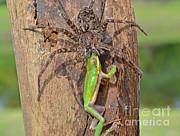 John Serrao - Fishing Spider