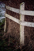 Fence Posts Framed Prints - Fit To Burst Framed Print by Odd Jeppesen