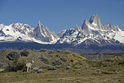 Fitz Art - Fitz Roy Range in Springtime 2 by Michele Burgess