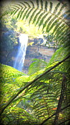 The Followers Posters - Fitzroy Falls Sydney Poster by Henry Adams