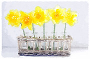 Ann Garrett - Five Daffs In A Row -...