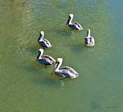 Michelle Wiarda - Five Pelicans