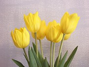 Kathleen Pio - Five Yellow Tulips