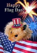 Jeanette K - Flag Day Hamster