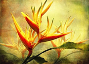 Tropical Bird Art Posters - Flames of Paradise Poster by Ellen Cotton