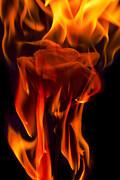 Flaming Rose Print by Jon Glaser