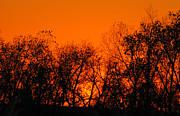 TONY GRIDER - Flaming Sunset II