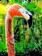 Flamingo Print by David Blank