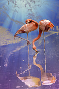 Bill Tiepelman - Flamingo Fantasy Lights