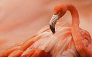 Vibrant Color Digital Art - Flamingo by Jack Zulli