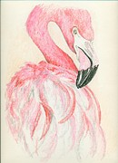Flamingo Drawings - Flamingo by Michelle Ferguson