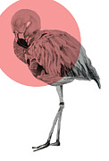 Mod Drawings - Flamingo by Morgan Kendall