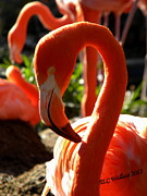 Flamingo Print by Tammy Wallace