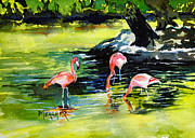 Spencer Meagher - Flamingos At The St...