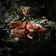 Flamingo Prints - Flamingos Gathering 2 Print by Ernie Echols