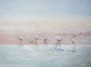David  Hawkins - Flamingos Peru