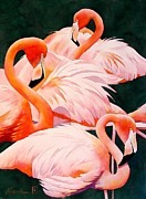 Flamingo Paintings - Flamingos by Robert Hooper