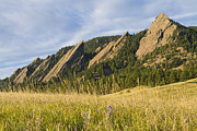 Boulder Metal Prints - Flatirons with a Purple Wildflower  Metal Print by James Bo Insogna