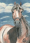 Mustang Paintings - Fleabitten Mare -- You Got a Problem With Freckles? by Sherry Goeben