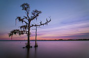 Bald Cypress Prints - Fleeting Light Print by Zach Frailey