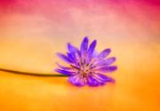 Fleur 2 Print by Sven Pfeiffer