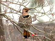 Travis Truelove Photography Prints - Flicker - Alabama State Bird - Attention Print by Travis Truelove