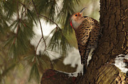 Fowl Photos - Flicker by Everet Regal