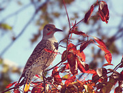 Melanie Lankford Photography - Flicker in Autumn