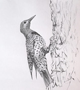 James Skiles Prints - Flicker Print by James Skiles