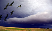 Yvonne Emerson - Flight Into The Storm