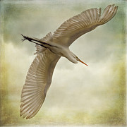 Breeding Digital Art Posters - Flight of the Egret Poster by Priscilla Burgers