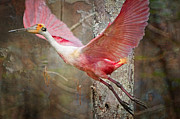 Bonnie Barry Art - Flight of the Roseate Spoonbill by Bonnie Barry
