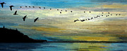 Canadian Geese Mixed Media - Flight Over Water by R Kyllo