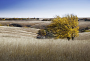 Flint Prints - Flint Hills Autumn 013 Print by Fred Lassmann
