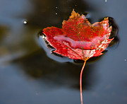 Fall Metal Prints - Float Metal Print by Edward Fielding
