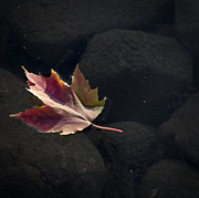 Autumn Leaf On Water Metal Prints - Float On Metal Print by Matthew Campbell