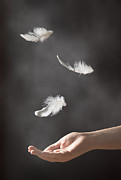 Floating Girl Metal Prints - Floating Feathers Metal Print by Christopher and Amanda Elwell