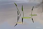 Michelle Wiarda - Floating Garden