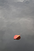 Autumn Leaf On Water Metal Prints - Floating Jewel Metal Print by Jake Barbour