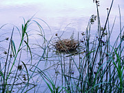 Carl Rolfe Art - Floating Nest by Carl Rolfe