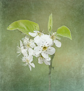 Textured Floral Prints - Floating on Green Print by Kim Hojnacki