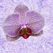 Anne Rodkin - Floating Orchid