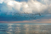 Fauna Originals - Flock of birds on seascape with blue sky by Serhii Odarchenko
