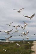 Randall Nyhof - Flock of Gulls by the Straits of Mackinac No. 2564