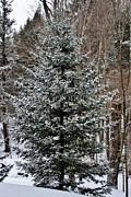 Butch Phillips - Flocked Pine
