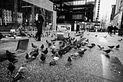 Flocks Photo Posters - flocks of pigeons on the street outside Vancouver city centre station on granville street BC Canada Poster by Joe Fox