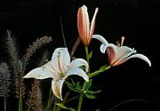 Floral Arrangement Print by Dan Ferrin