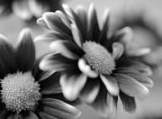 Corinne Rhode - Floral contrast