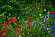 Jeremy Rhoades - Floral Explosion